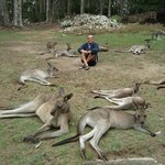 Among the kangaroos