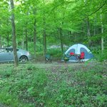 Wooded Campsite