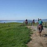 Kiwi Stylz Horse Treks Foto