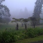 misty view from the lodge