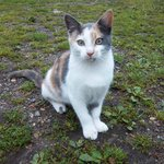 Mini, our VERY friendly feral farm cat who has tamed herself! She is a real character!