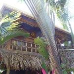 Tree Frog Cabana