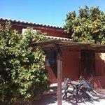 Le arance selvatiche del Fusino