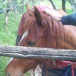 uno dei bellissimi cavalli dell'agriturismo