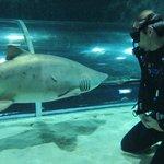 Imagen de New Zealand Diving