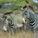 Travel Wild Safaris- Day Tours