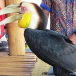 Cool Pet of the Fast Boat to Gili's Captain