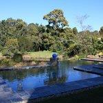 Seerosenteich und Pool