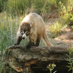 provided by: Arizona-Sonora Desert Museum