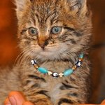 How can you resist a shop kitten complete with a necklace?