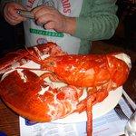 lobster 5,5lbs.