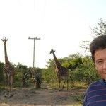 girafas embaixo da casa na arvore