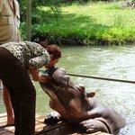 beijando a hipopotama Jessica