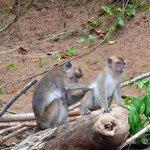 Macacos en el río
