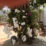 les fleurs près de la piscine
