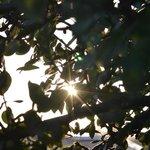 raggi tra gli alberi