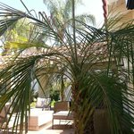 Palms on the patio.