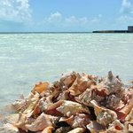Conch pile up at Bugaloos.  Very local, very cool.