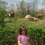 Elephants and Melody