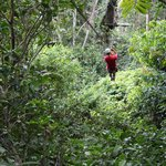 Zip lining with Bosque Mar, arranged by Lapa Rios