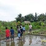 Planting Paddy 2