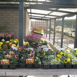 Bedding plants/shrubs