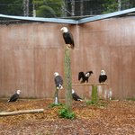Inside the bald eagles facility