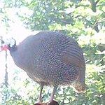 Turkey Bird around resort