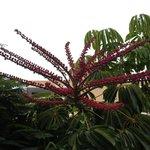 Tropikalna roślinność otaczająca hotel