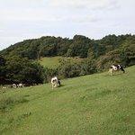 Kurosawa Highland Kurosawa Ranch