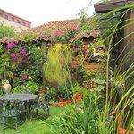 Bela's garden