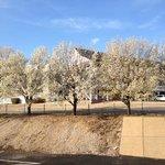 Spring blooms near the Inn