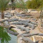 Krokodilfarm Animalia