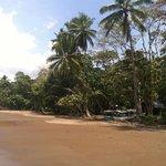 Beach Walks