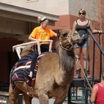 Camel Ride at Tuacahn Saturday Market