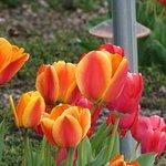 spring flowers abloom