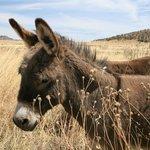 cute donkey!!!