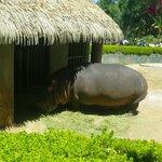 Feliz el Hipopotamo