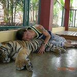 Tiger Kingdom, Mae Rim