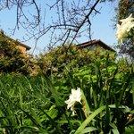 Photo of Agriturismo Villa Buontempo