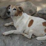 Tumi the camp guard dog