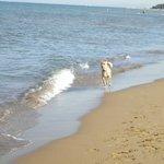 Pixie corre libero e felice in spiaggia