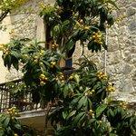 Atmosphäre unter Bäumen Set Jakuranda Kyrenia