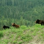 Love the bears