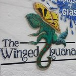 Winged Iguana Gallery