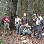 The island's Big Tree (Ceiba)