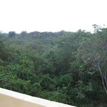View of the jungle from the third floor.