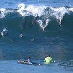 Dolphins on Solar Beach