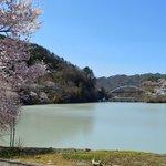 高遠湖畔の桜