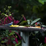 los pájaros que se acercan al área del comedor